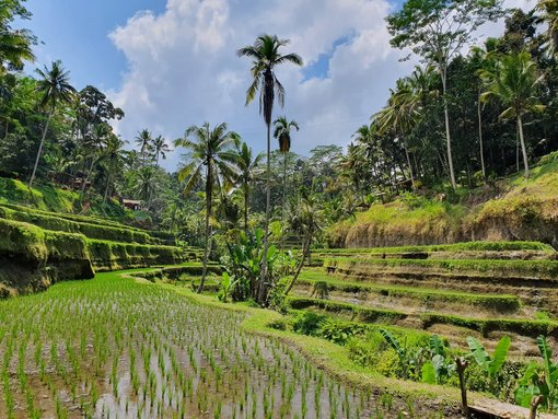 How to Keep Costs Down in Bali – Avoiding the Tourist Traps