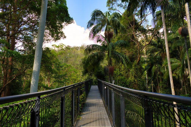 The Skywalk which takes you into the canopy