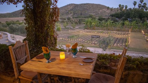The Top Farm To Table Restaurants In Los Cabos