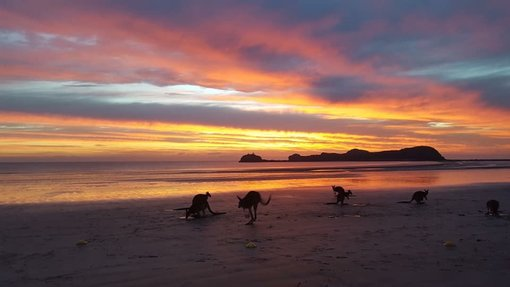 The Magic of Cape Hillsborough - North Queensland
