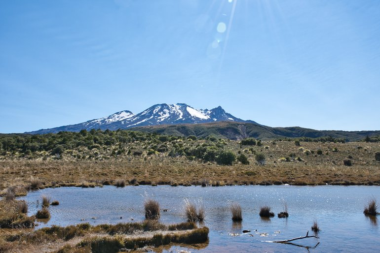You come out of the bush to a boardwalk and a fantastic view of Mt Ruapehu