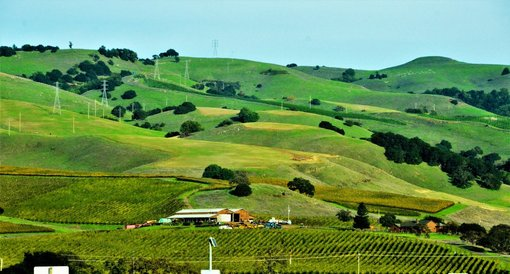 How to enjoy Napa Valley Wine Country with Kids!
