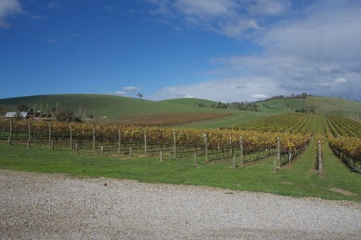 5 Tips for Planning a Successful Wine Region Road Trip