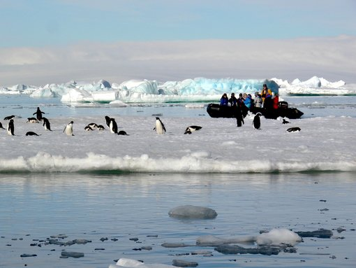 When to make a cruise to Antarctica and what to see
