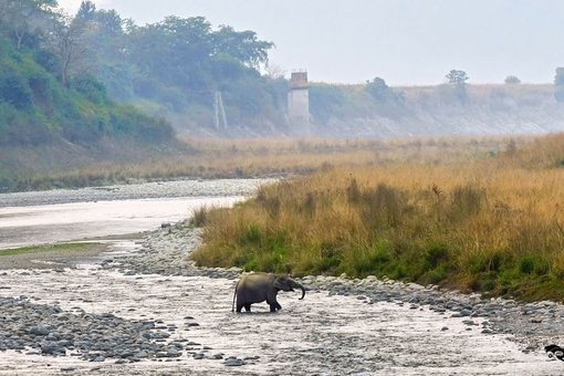 The land of Bagh - Corbett (India)