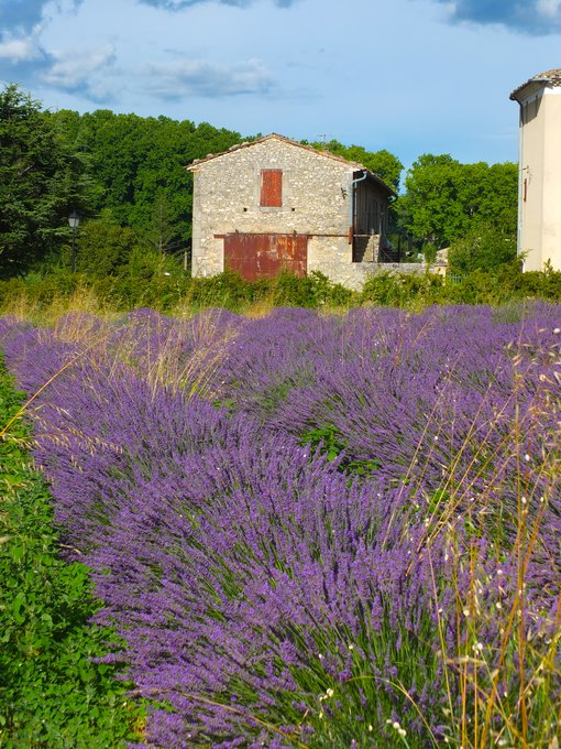 Finest Lavender Views in Provence