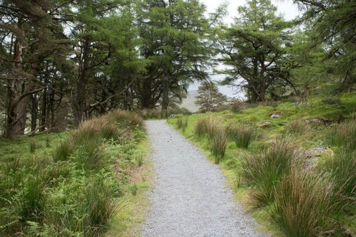Walking Trail in Snowdonia National Park