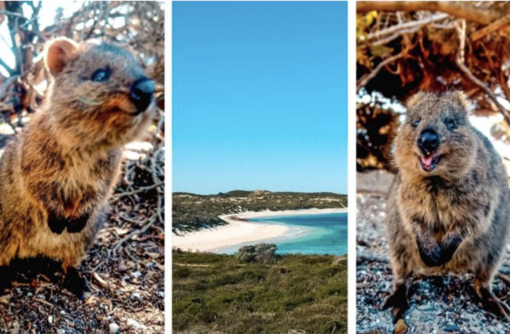 Rottnest Island – Home to The Happiest Animal in The World
