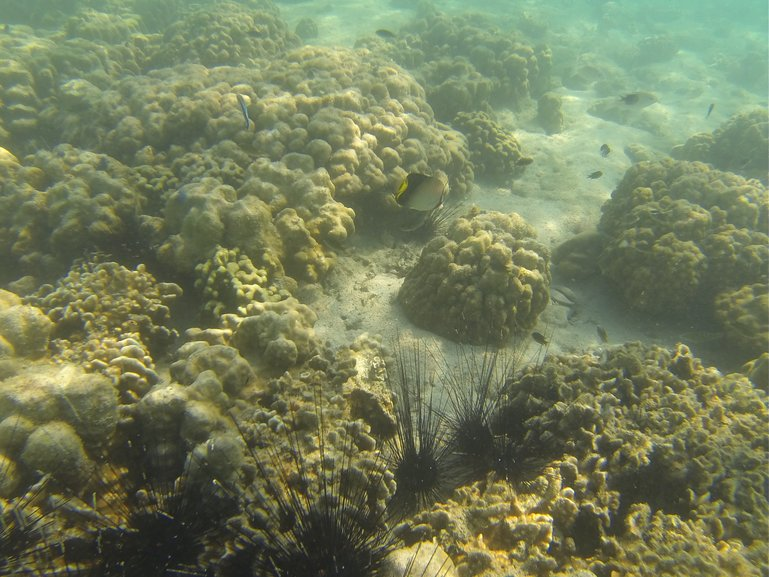 Marine Organisms at sea bed near Zar Det Gyi Island, Myeik