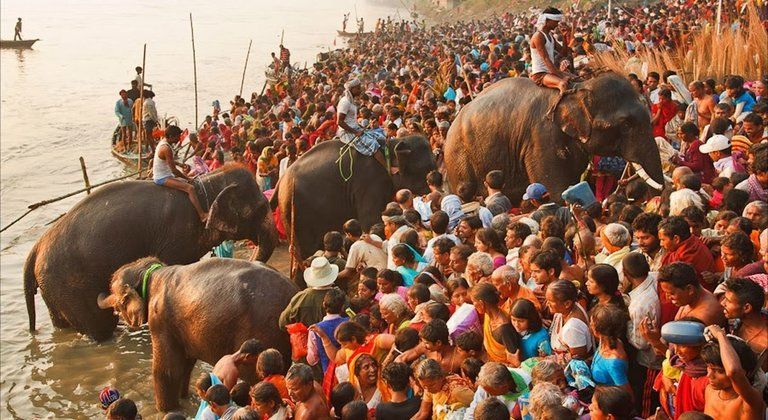 Sonpur Mela, also known as the Sonepur Cattle Fair