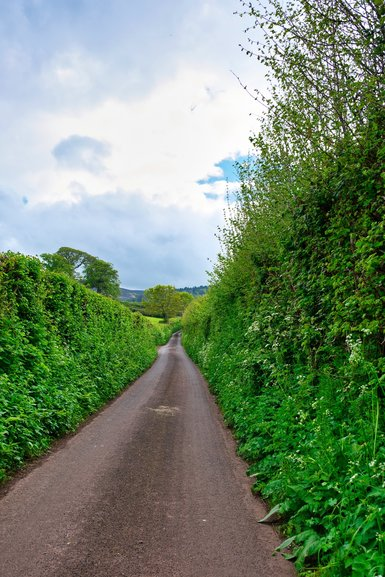 A single lane road on the back roads of Exmoor