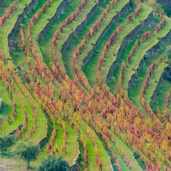 Terraces in Douro Valley