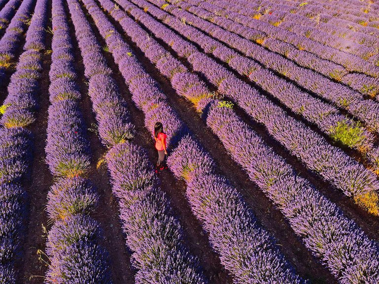 Stunning aerial view of lavender field in Provence