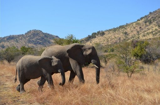 Safari Guide: Making the Most of Your African Safari