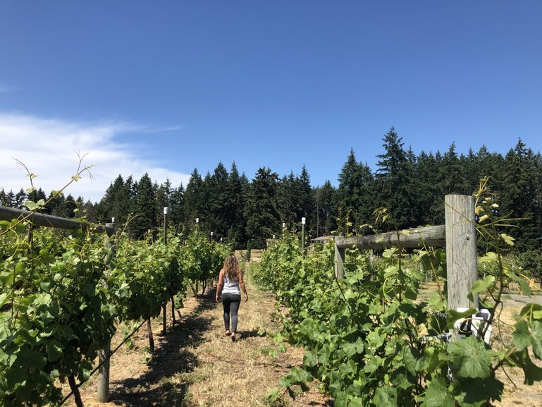 Bianca walking through a vineyard