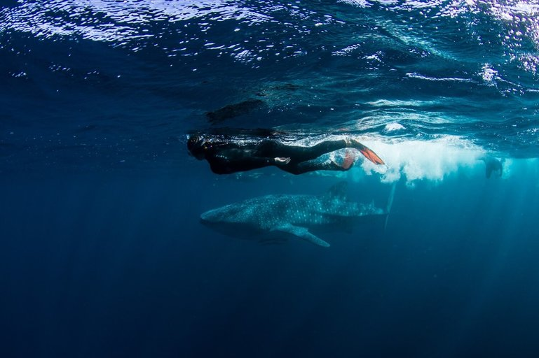 Simone and a whale shark