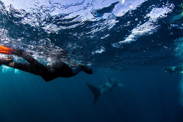 Following the whale sharks
