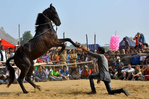 The Undeniable Magic of the Nagaur Cattle Festival