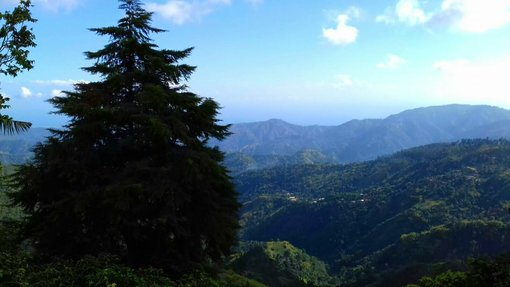 Visiting the Jamaican Blue Mountains