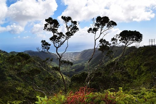 Top 5 Beautiful Hikes To Explore In Oahu, Hawaii
