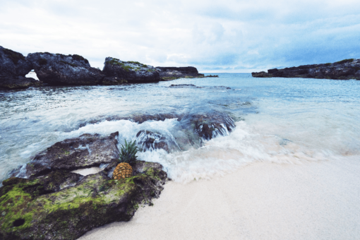 Best Excursions in Playa del Carmen