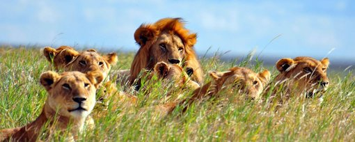 Wildlife Safaris in Tanzania Every Animal Lover Needs to Take!