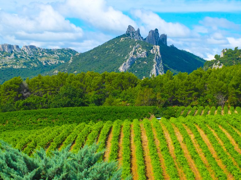 Dentelles de Montmirail from Suzette