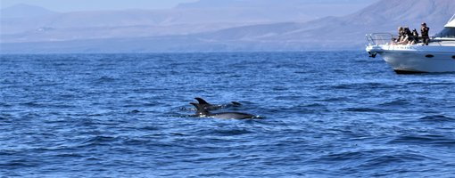 A Guide to Ethical Dolphin Watching