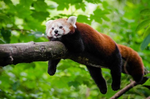 Sikkim – Explore the Land of the Glorious Red Panda