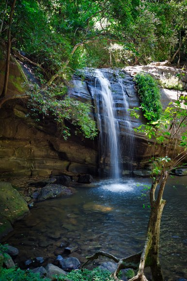 Buderim Falls are falling into the swimming hole